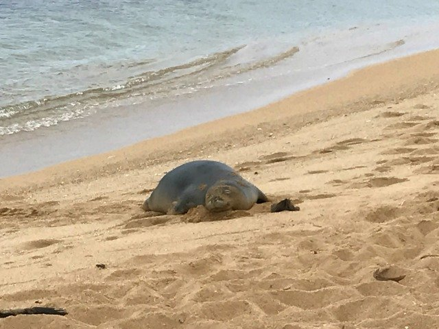 Monk Seal 2017