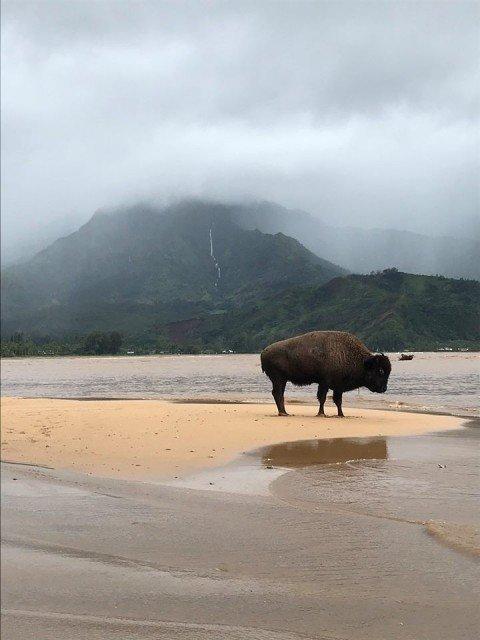 2018 Kauai Flood - Ian Nelson