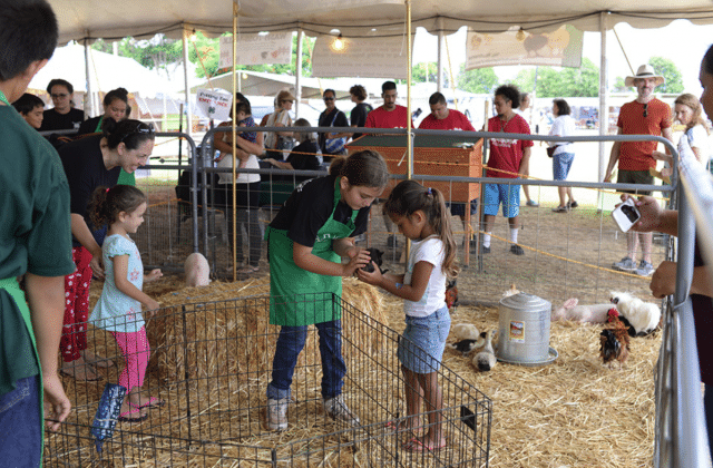 Kauai Farm Fair - Petting Zoo