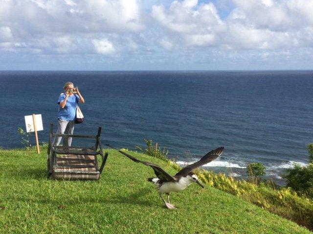 Pela, albatross chick - Princeville, Kauai, HI